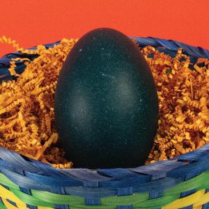 Emu Egg